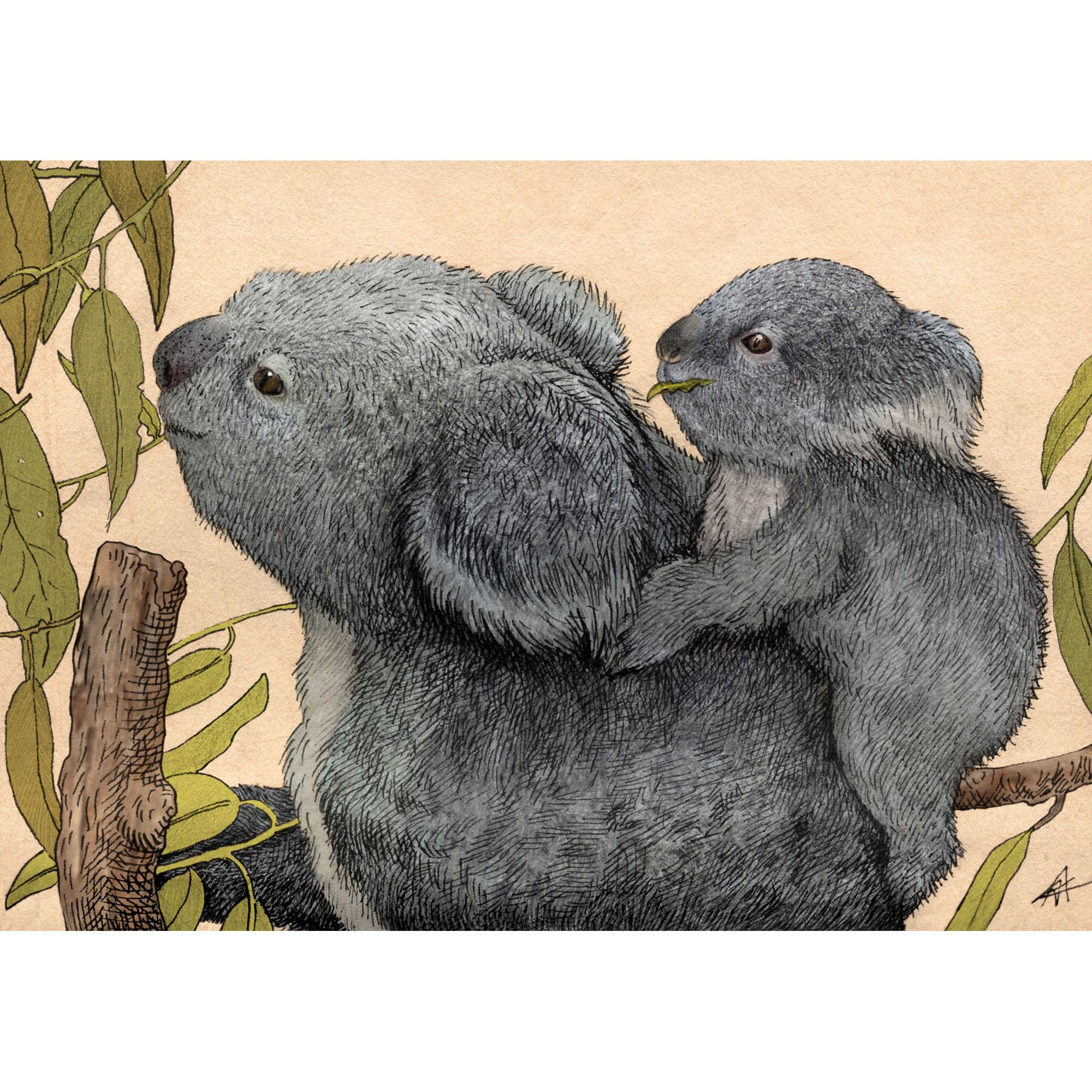 Kamila Wojciechowicz-Krauze - Dwie koale