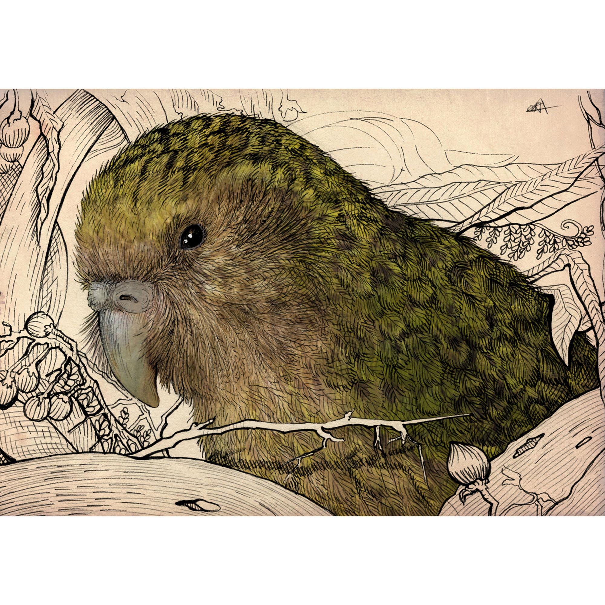 Kamila Wojciechowicz-Krauze - Kakapo