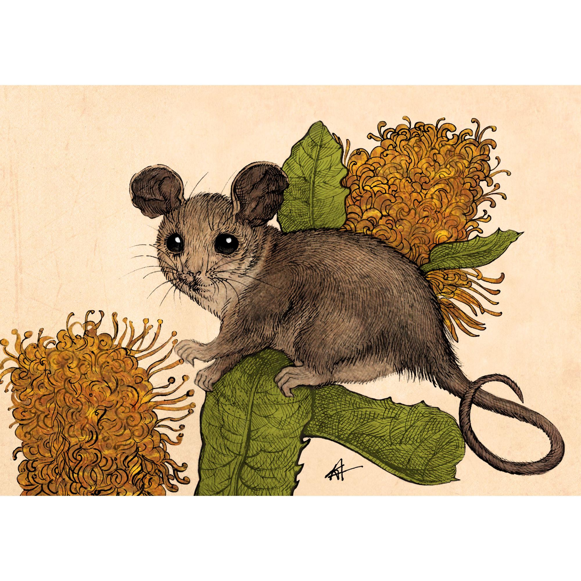 Kamila Wojciechowicz-Krauze - Pygmy Possum